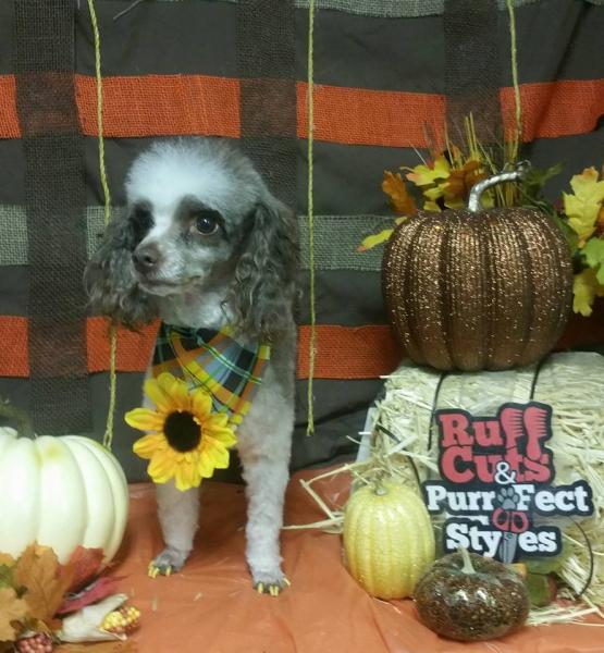 A fresh hair cut and fresh pedicure are just what your pet needs to transition into fall!